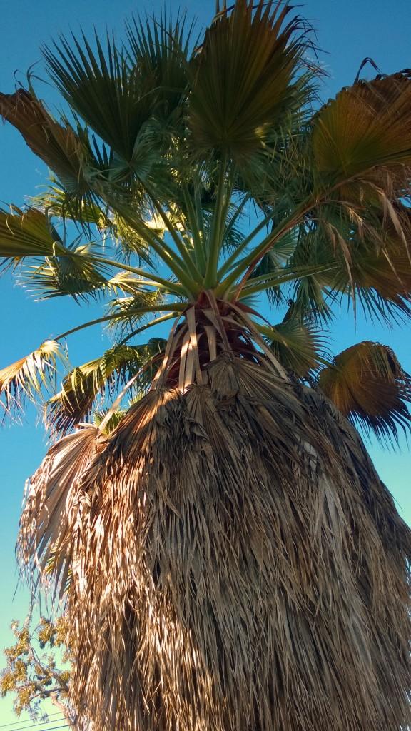 palm tree_1
